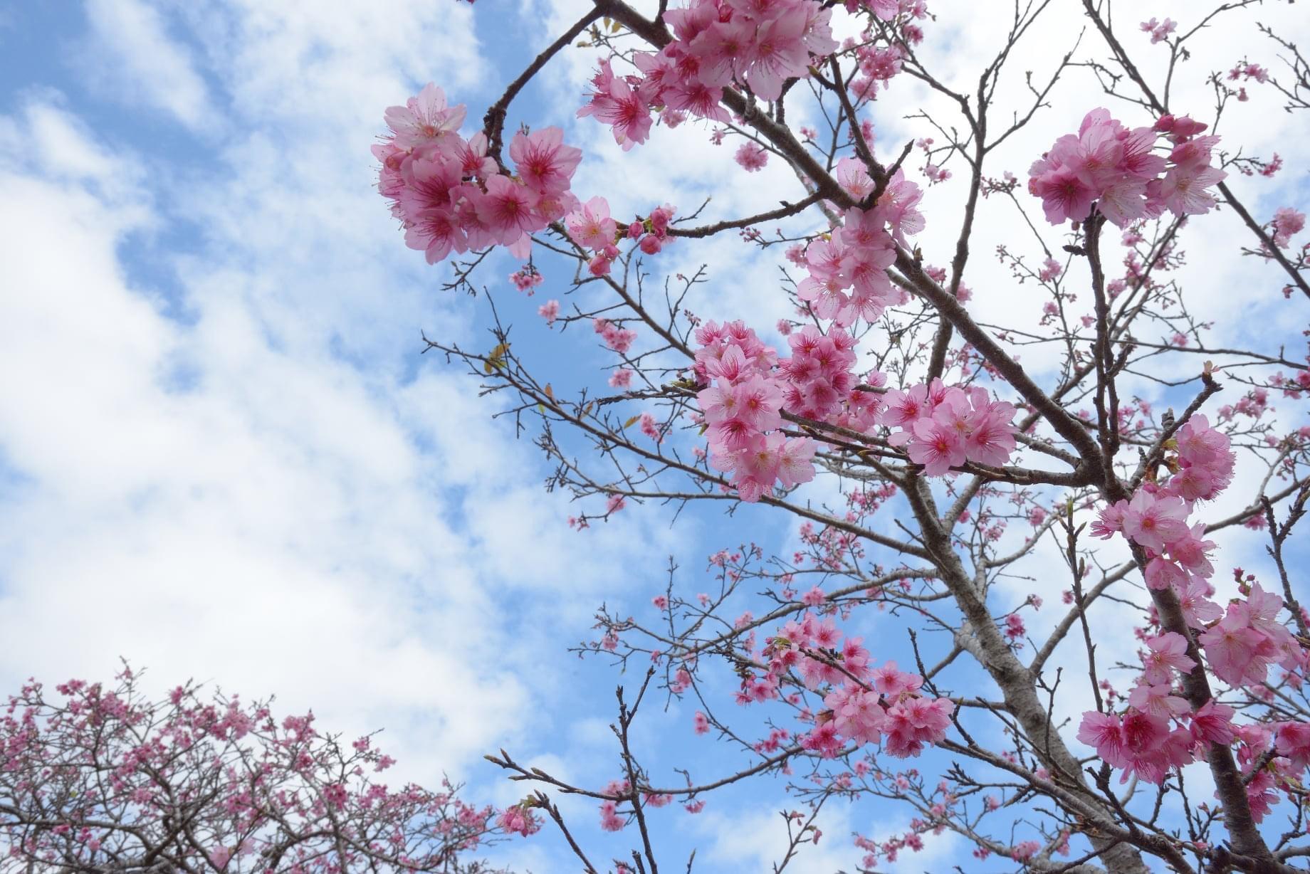 春まっ盛り